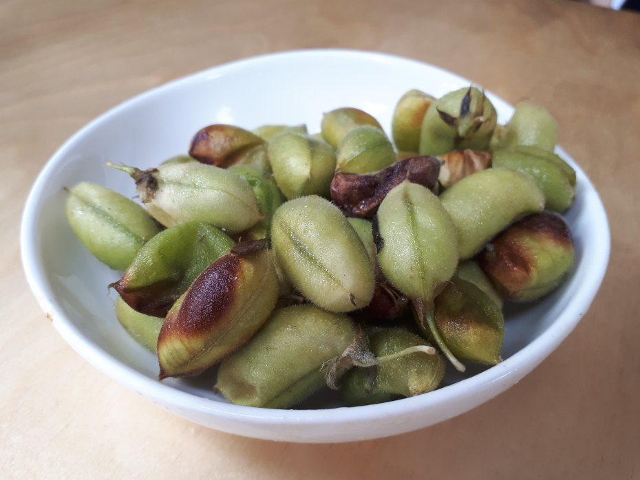 תרמילי חומוס ירוק קלויים